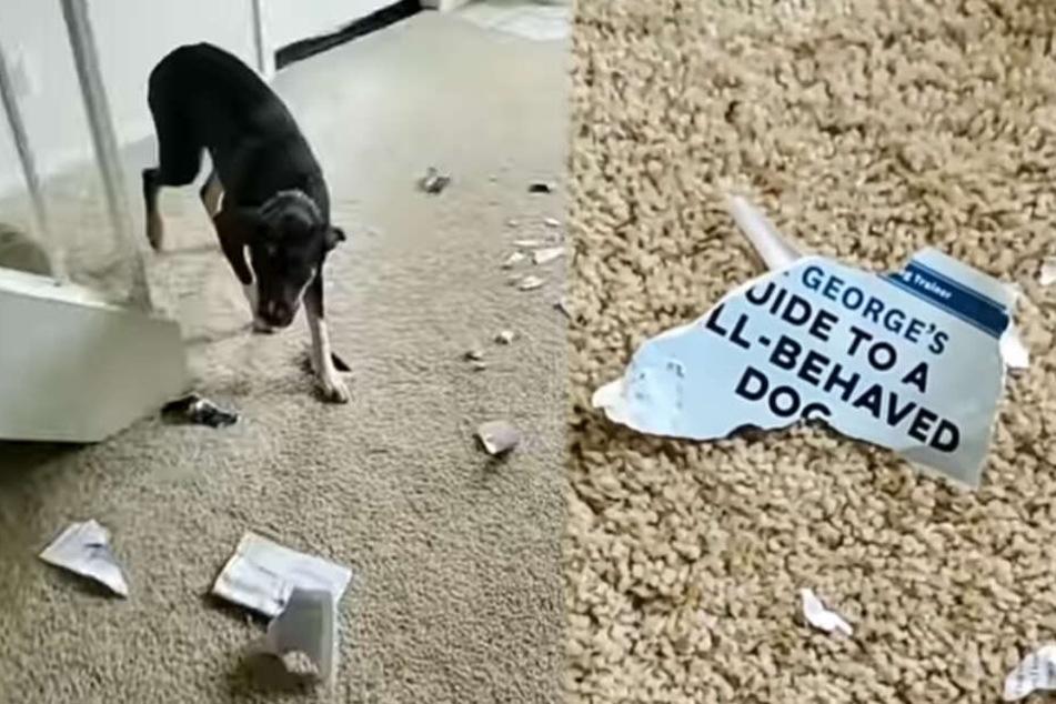 """Der Hund war mit dem """"Guide to well-behaved Dog"""" ganz offensichtlich nicht einverstanden."""