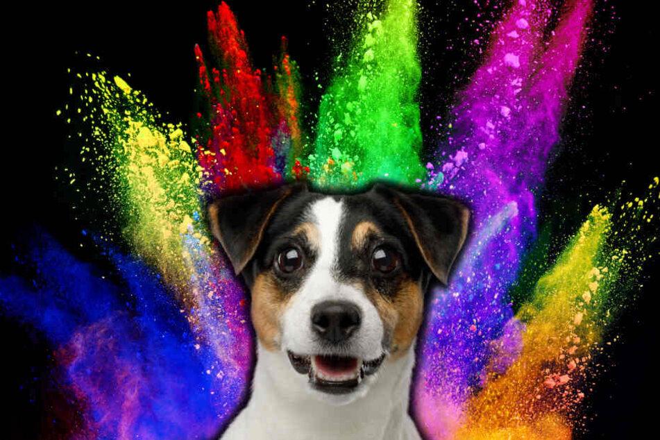 Hundehalter fragen sich oft, ob ihr Hund Farben sehen kann.