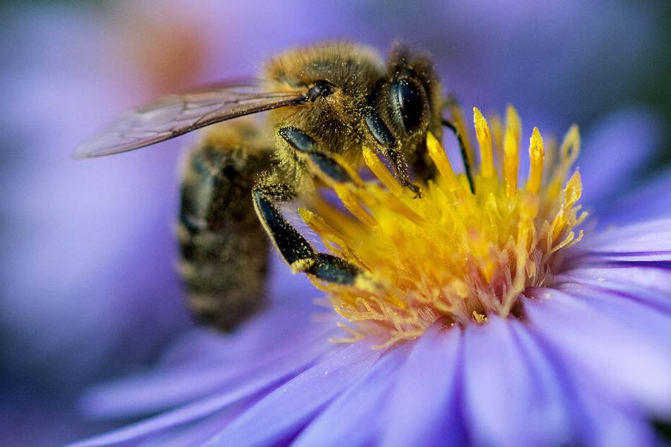 Insekten aller Art, Bienen und Hummeln sollen sich auf der Kläranlage wohlfühlen.