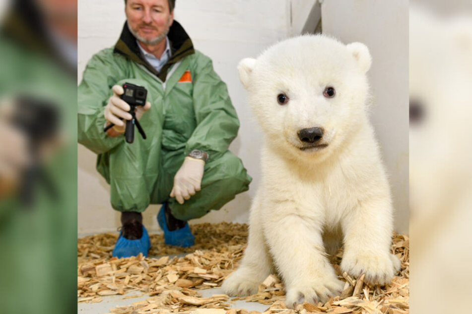 8,5 Kilo und zuckersüß: Die kleine Eisbärin im Tierpark