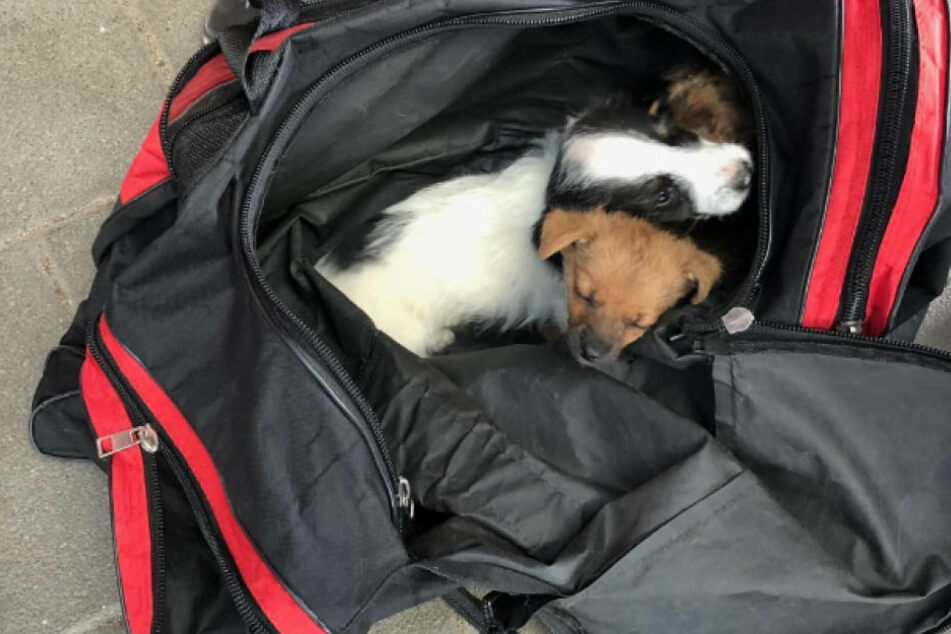 Hunde-Babys in Sporttasche! Polizei schnappt Tierschmuggler in Zug