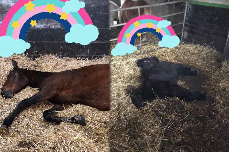 Fünf Pferde vergiftet! Reiterhof setzt 5000 Euro Belohnung aus