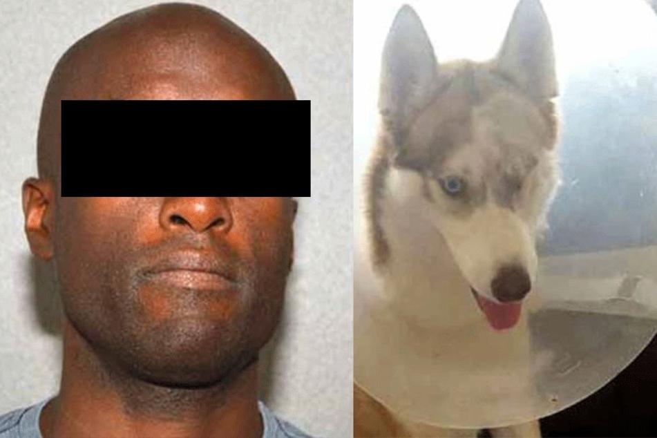 Mann sticht Hund seines Nachbarn Auge aus: Ein weiterer Husky ist spurlos verschwunden
