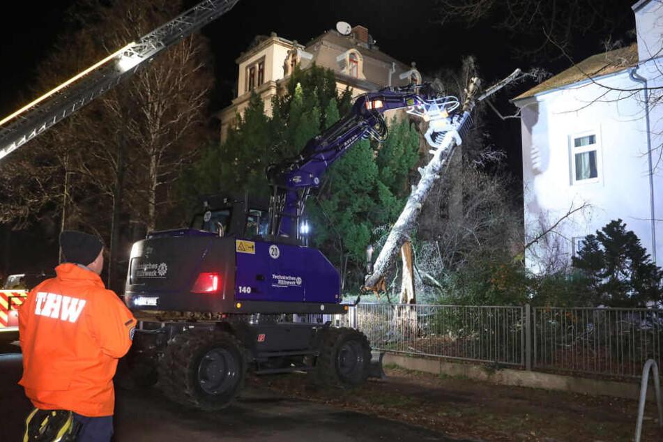 Eine Birke musste mit einem nagelneuen Bagger des THW in der Dresdner Behrischstraße von einem Mehrfamilienhaus geholt werden. Sie beschädigte das Dach und den Schornstein.