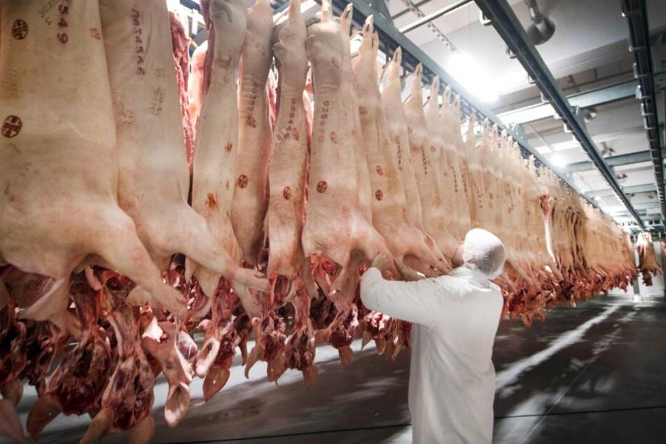 Frisch geschlachtete Tiere hängen in einem Kühlhaus des Fleischunternehmens.