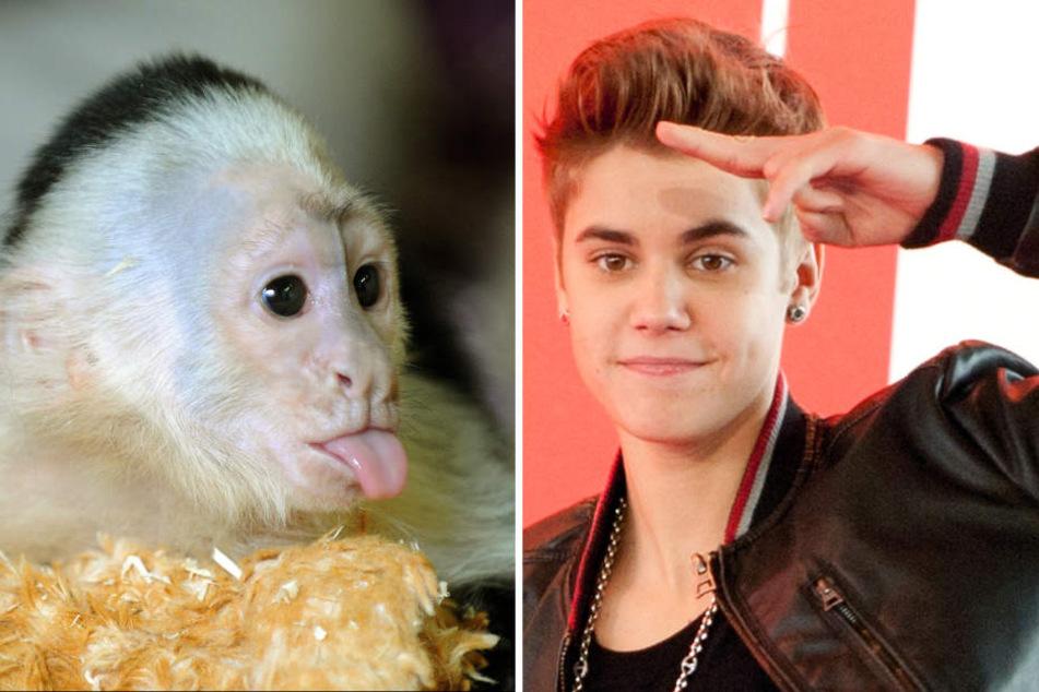Sänger Justin Bieber (r) und sein Weißschulterkapuzineräffchen Mally(l). Archivbilder.