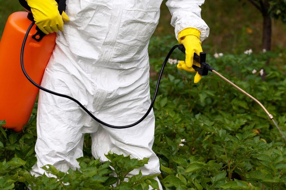 In vielen Bereichen wird die Anwendung von Glyphosat zur Unkrautbekämpfung verboten. (Symbolbild)