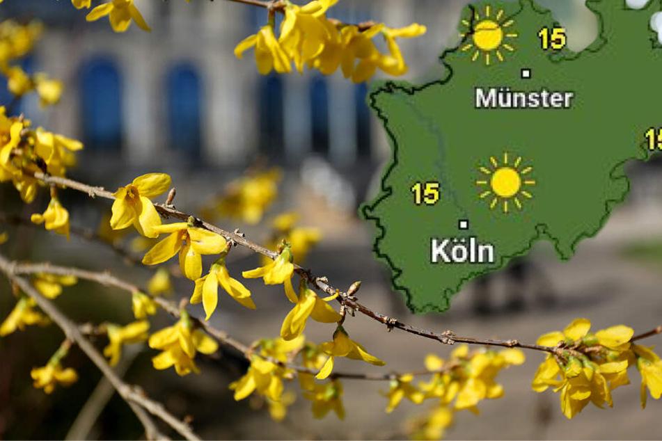 Ende der Woche sind Temperaturen bis zu 19 Grad möglich.