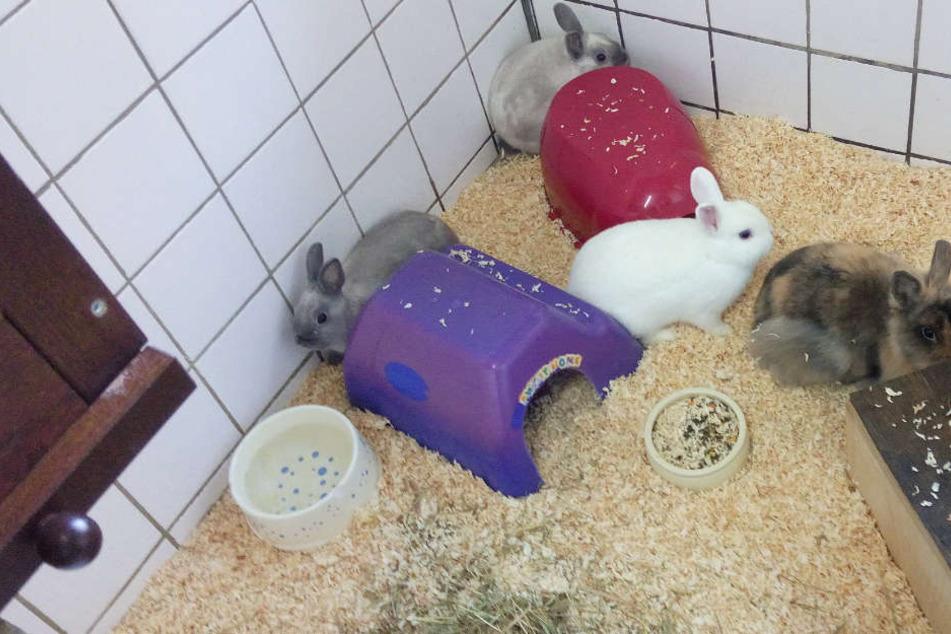 Die Hasen wurden in einem Tierheim untergebracht.