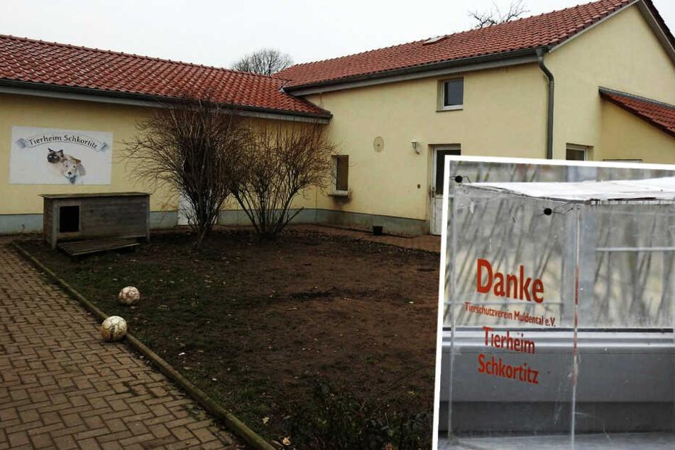 """Unheimlicher """"Adventskalender"""": Fünftes Tierheim in Sachsen geplündert"""