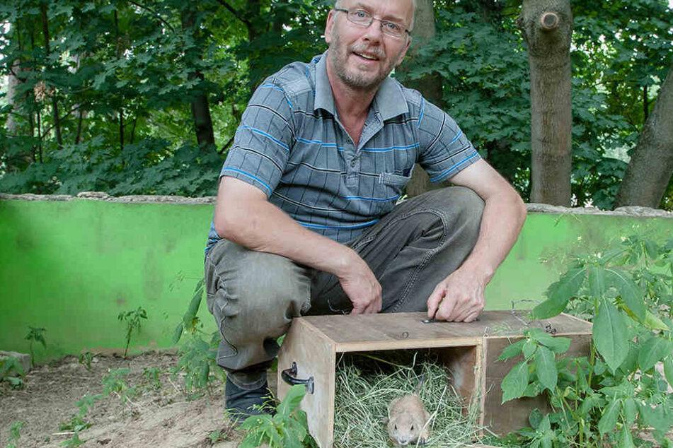 Tierparkchef Heiko Drechsler (55) freut sich über die fünf Jungtiere aus dem Dresdner Zoo.