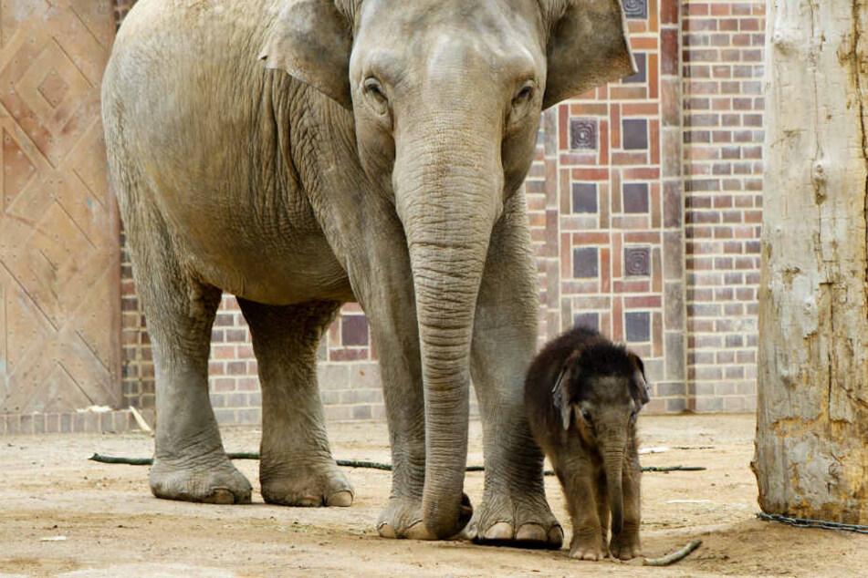 Der kleine Ben Long wurde von seinen Tanten Don Chung und Rani aufgezogen. Er wurde nur acht Monate alt.