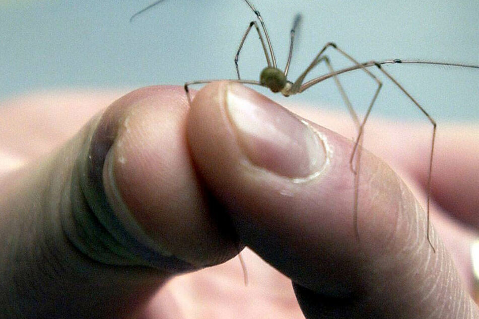 Mann erschlägt Spinne und löst damit Großeinsatz der Polizei aus