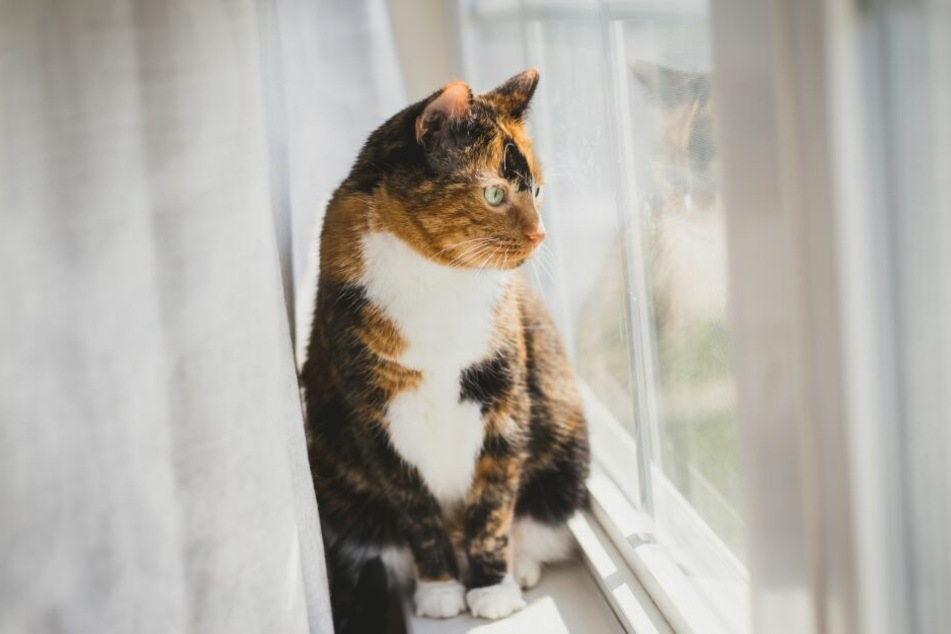 A nice window seat is enough to make the cat happy.