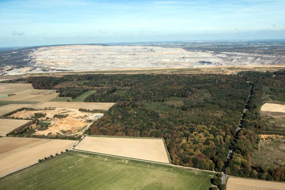 Die Reste des Hambacher Forst am Tagebau Hambach.
