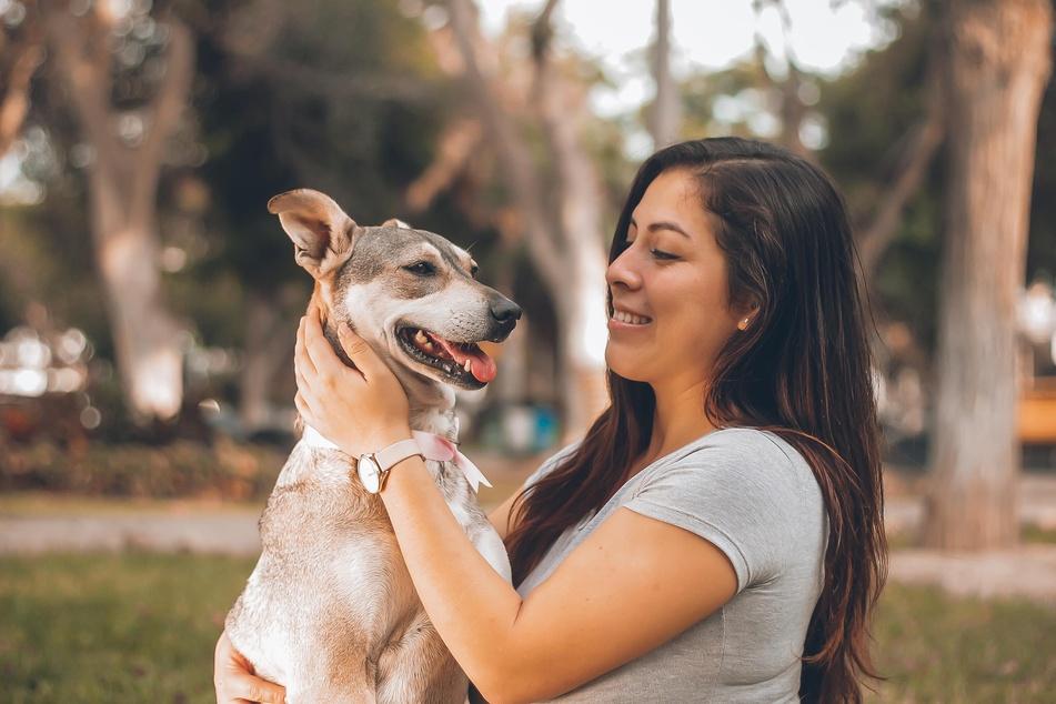 Hundehalter sollten sich für ein erfolgreiches Training mit dem Hund freinehmen.