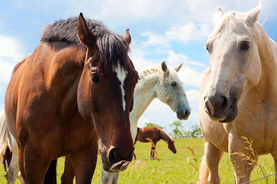 Auf einer Weide in Bad Lippspringe wurde ein Pferd attackiert. (Symbolbild)