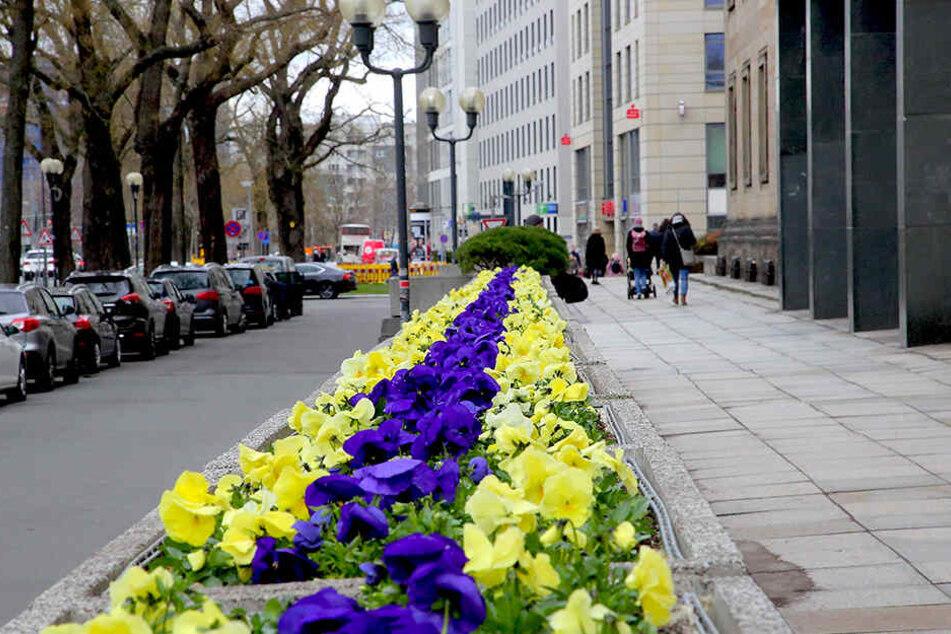 Vor dem Rathaus wurden am Montag die ersten Frühblüher gepflanzt.