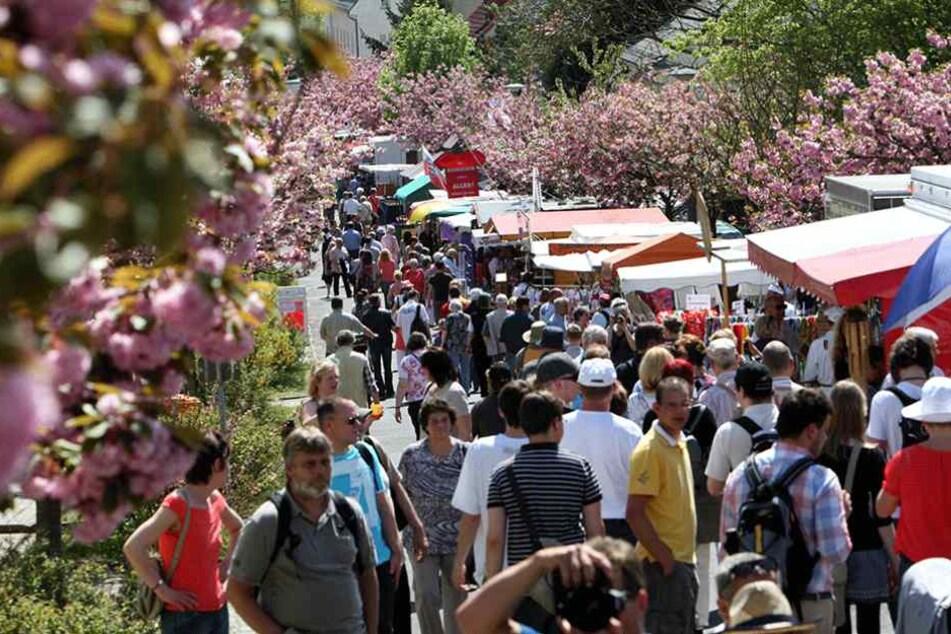 Das Baumblütenfest in Werder ist eines der größten Volksfeste in Deutschland.