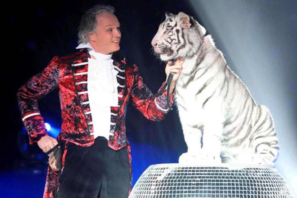 Ob André Sarrasaniim November wieder während seiner Dinnershow mit den Tigern (im Foto Kaya) auftritt, steht noch in den Sternen.