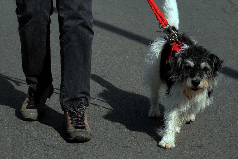 Er wollte nur mit seinem Hund Gassi gehen, plötzlich überfiel ihn der Besoffene. (Symbolbild)
