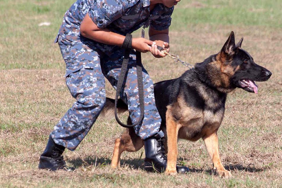 Ein Militärhund rettete sechs Soldaten ins Syrien das Leben. (Symbolbild)