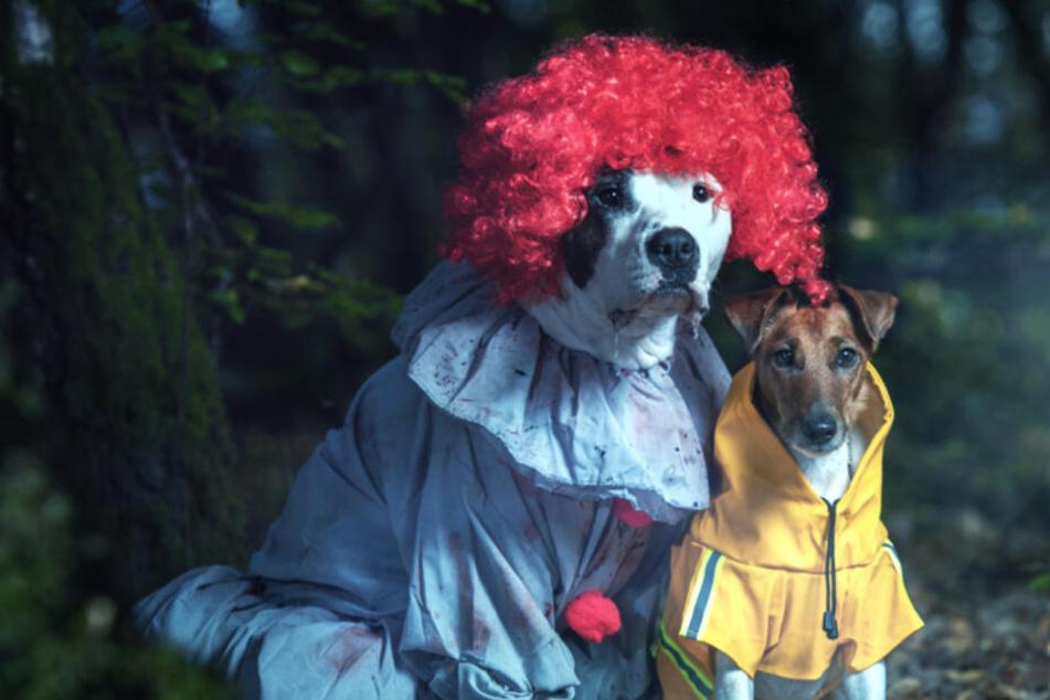Diese Hunde stellen einen Gruselfilm nach