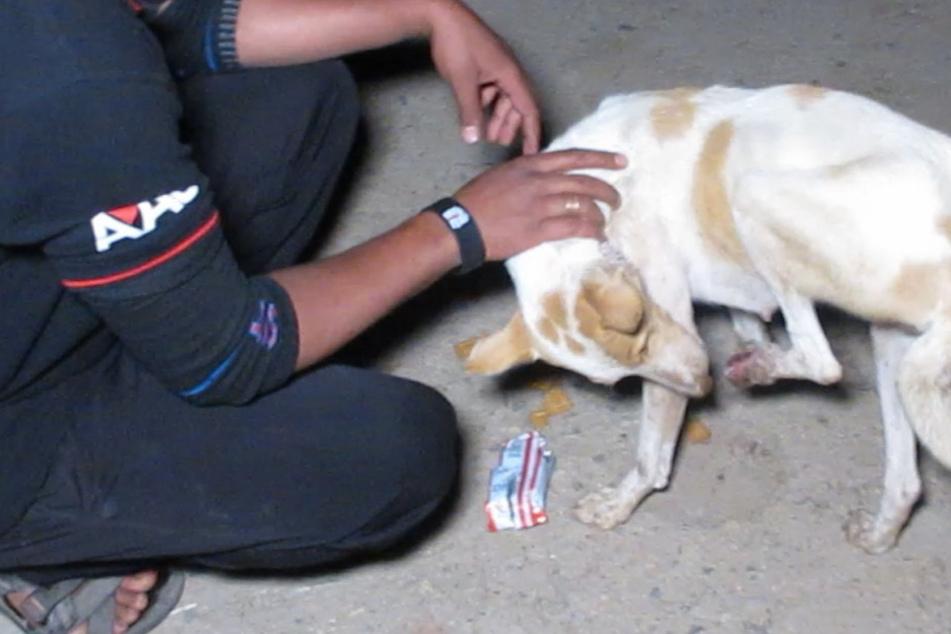 Hunde-Mama wirkt verzweifelt: Dann nimmt endlich jemand Notiz von ihr