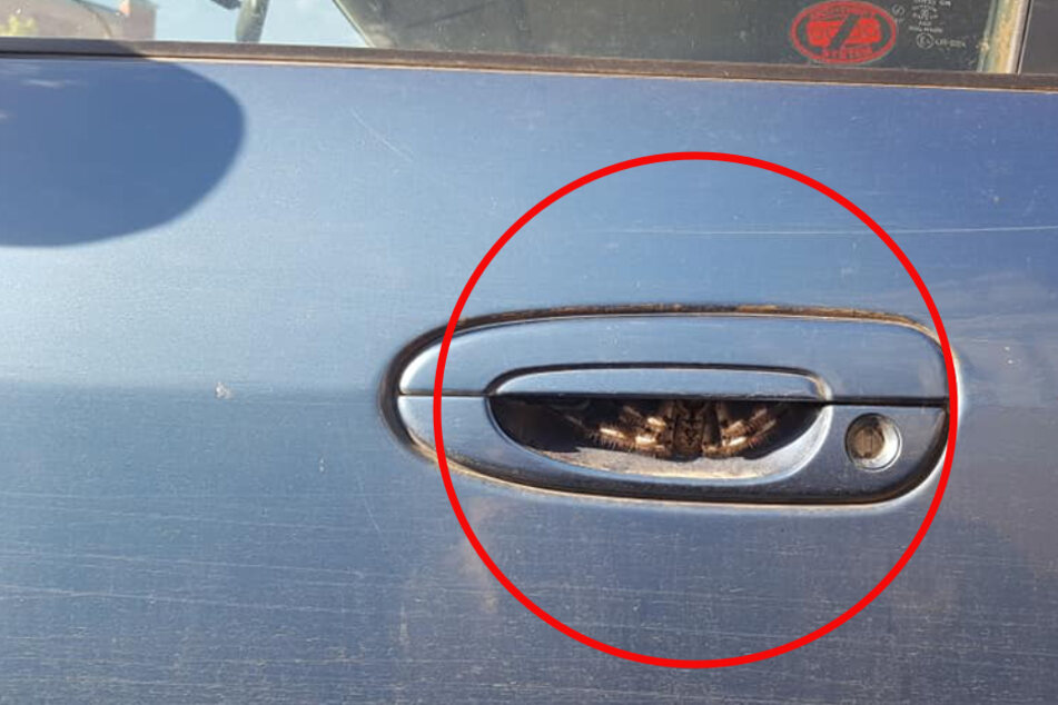 Australian woman finds hairy horror hiding in her car door handle