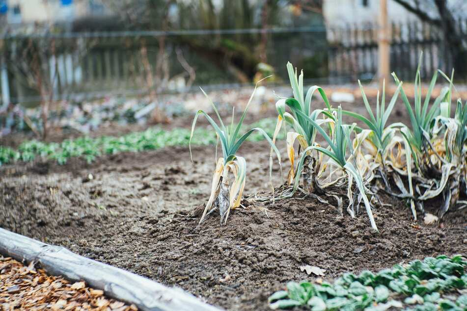 Die Beete brauchen im Herbst keine große Pflege. Etwas Laub und Reisig zu verteilen, reicht oft schon vollkommen aus.