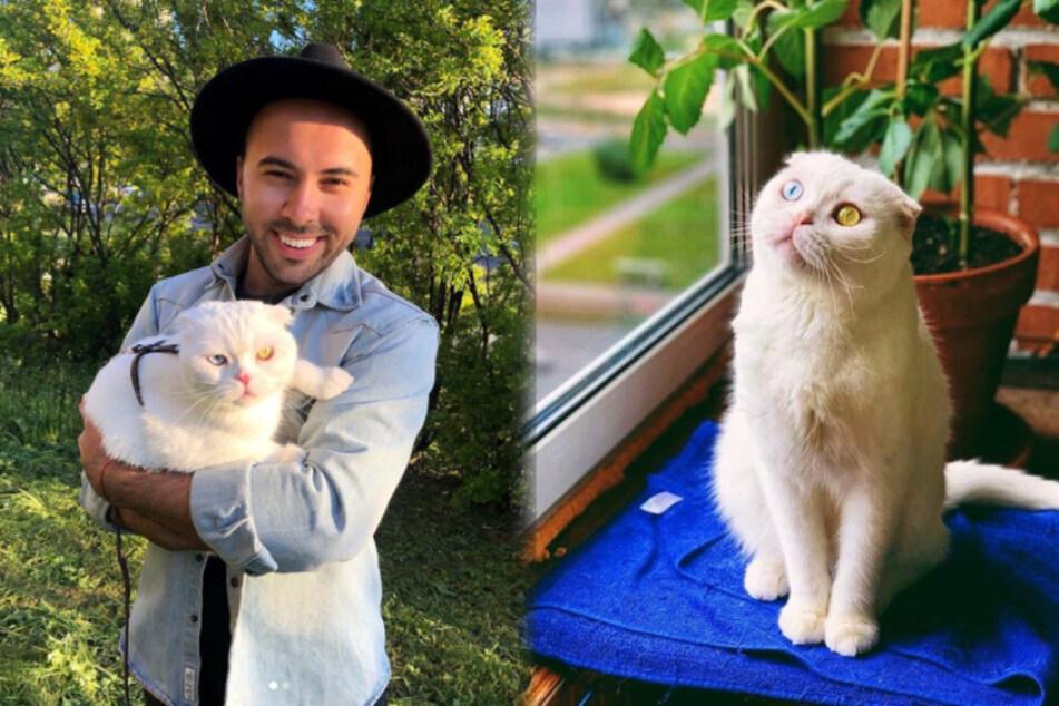 Niemand wollte diese Katze haben, jetzt ist sie ein Internet-Star