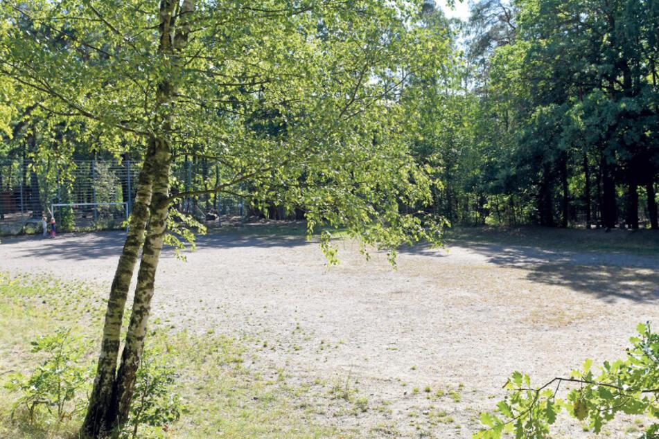 Dieser Bolzplatz im Albertpark könnte zum richtigen Sportplatz werden.