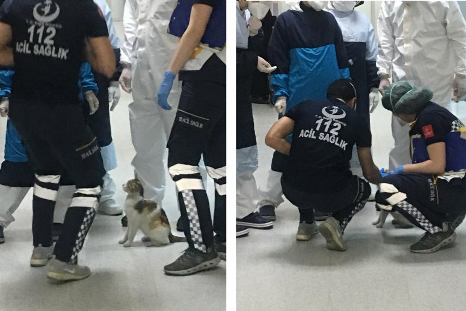Die Pfleger streichelten die Katzenmama, während sie ihr Junges begutachteten.