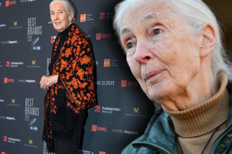 Affen-Forscherin Jane Goodall verzweifelt an der Menschheit