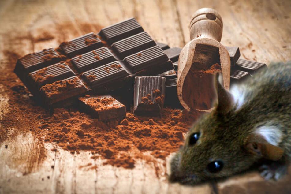 Die Ratten hatten sich an der Schokolade bedient. (Fotomontage)