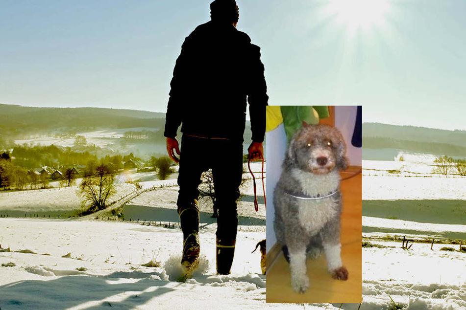 Eine Ärztin aber kam zum Ergebnis: Es ist ein Hund der Rasse Perro de Agua Espanol. Also heißt es: Hundesteuern werden fällig!