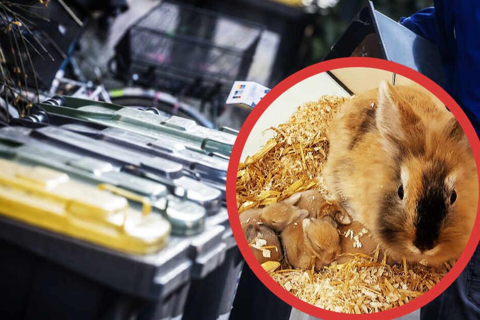 Geht's noch? Mann wirft neugeborene Hasen-Babys zum Sterben in die Mülltonne