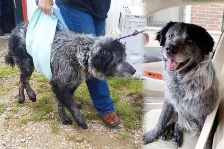 Hund kann nicht aufhören zu lachen, nachdem er gerettet wurde