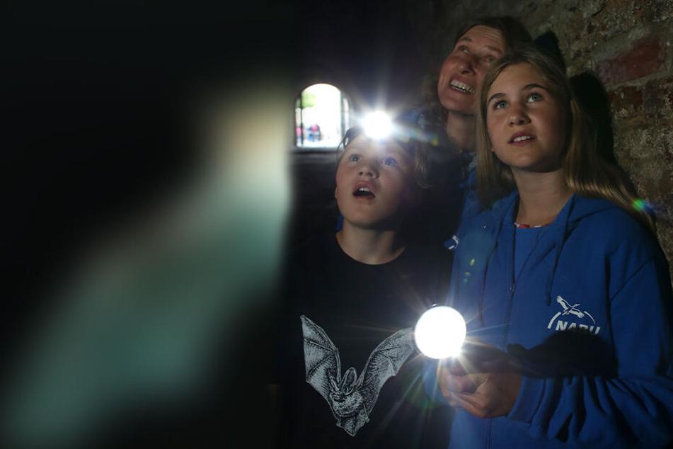 Im Landkreis Zwickau geht's zur Nacht der Fledermäuse mit der Taschenlampe auf Entdecker-Tour zum Kleinen Filzteich.