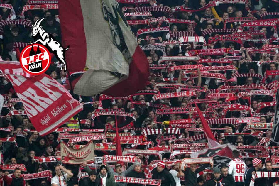 1. FC Köln kämpft wieder: So jubeln die Effzeh-Fans
