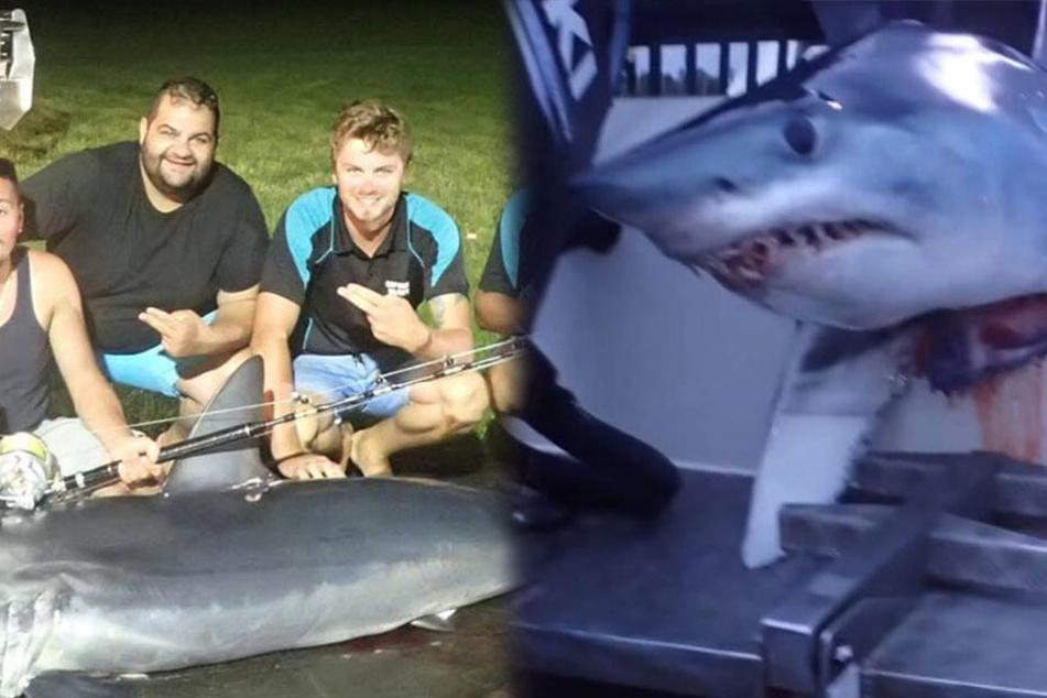 Männer fahren mit Hai durch die Gegend und wollen ihn anschließend essen