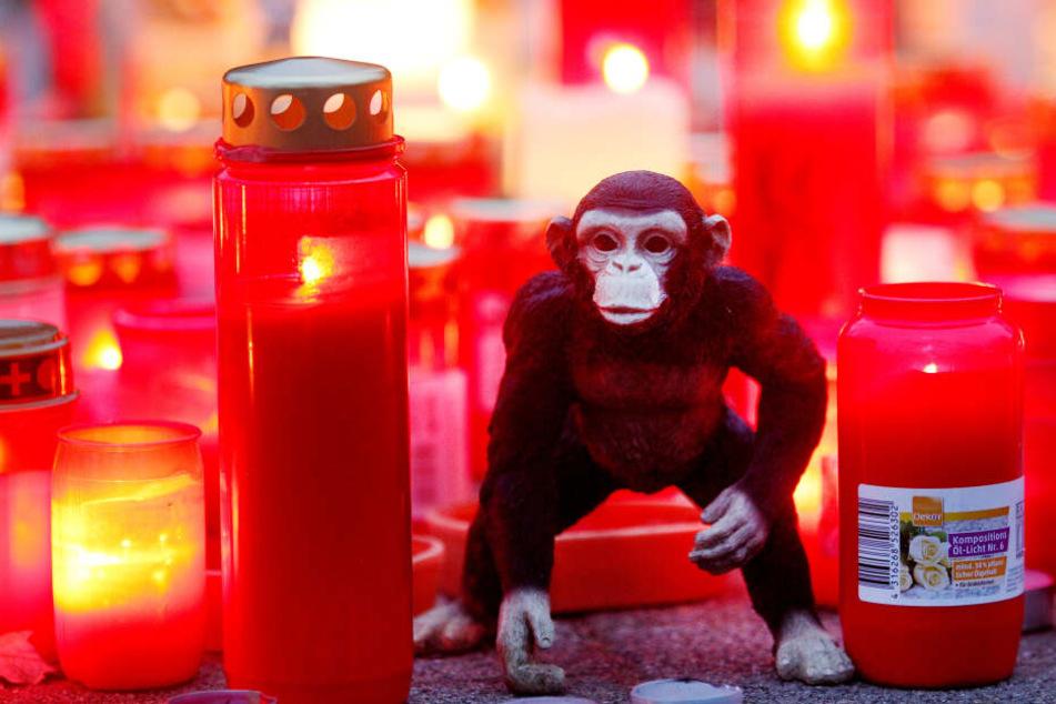 Zwei Tage nach dem Brand im Affenhaus des Krefelder Zoos steht ein Stofftieräffchen neben Trauerkerzen
