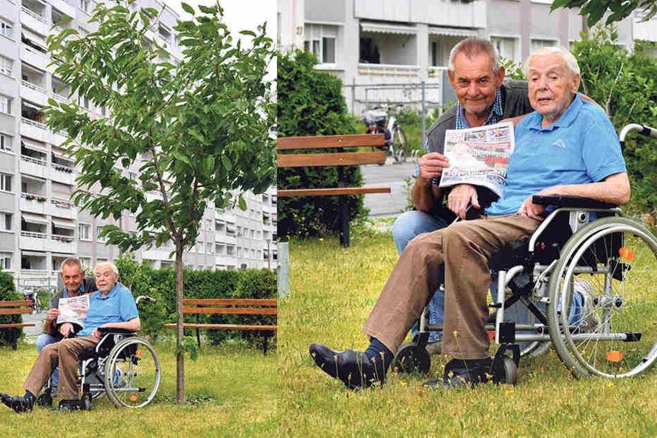 Wieder glücklich: Richard Vogel mit Sohn Ralf (66) vorm Kirschbaum in der  Johannstadt, den der Greis selbst pflanzte.