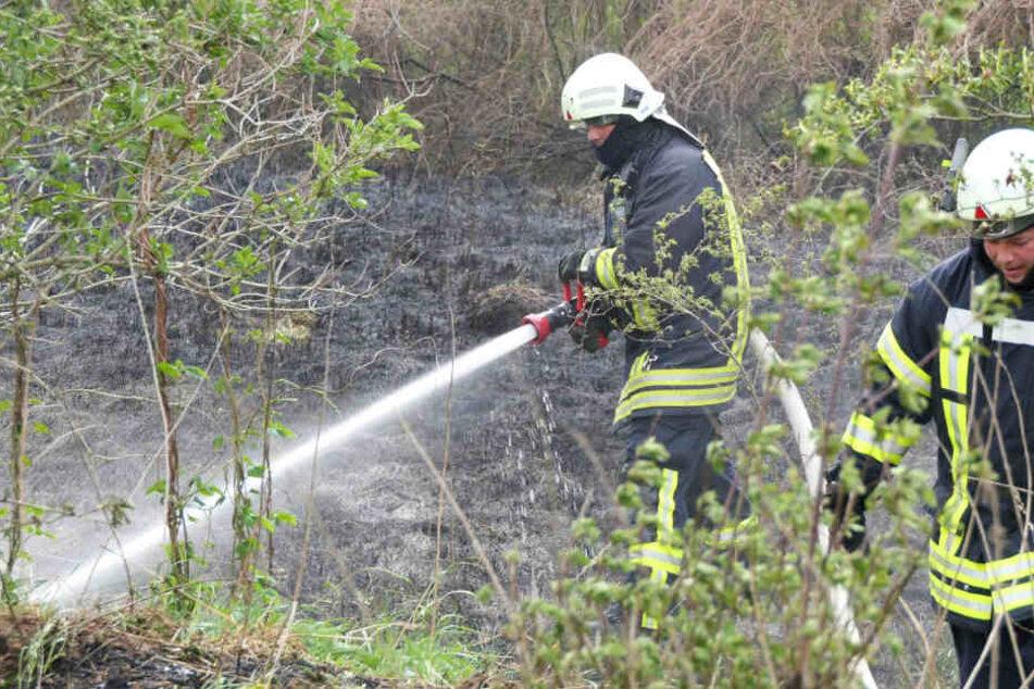 Hunderte Quadratmeter in Flammen! Feuerwehrmann bei Löscheinsatz verletzt