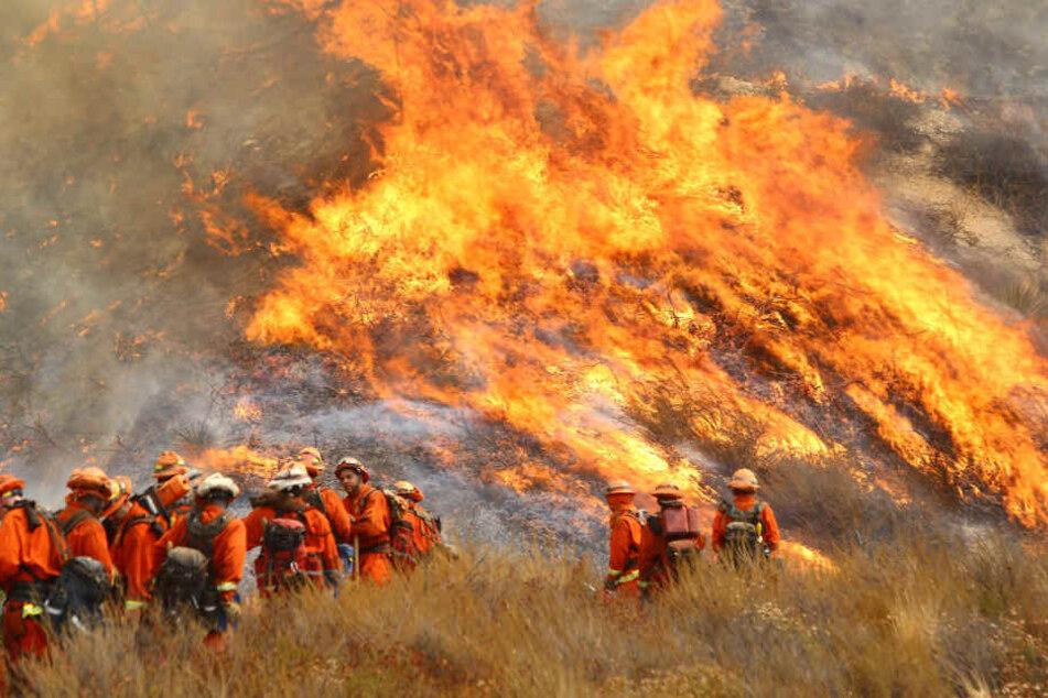 Mehrere Feuerwehrleute kämpfen gegen die Flammen.