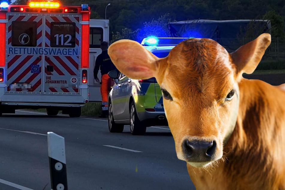 Kalb läuft auf Autobahn und verursacht heftigen Crash: Ein Mann schwer verletzt