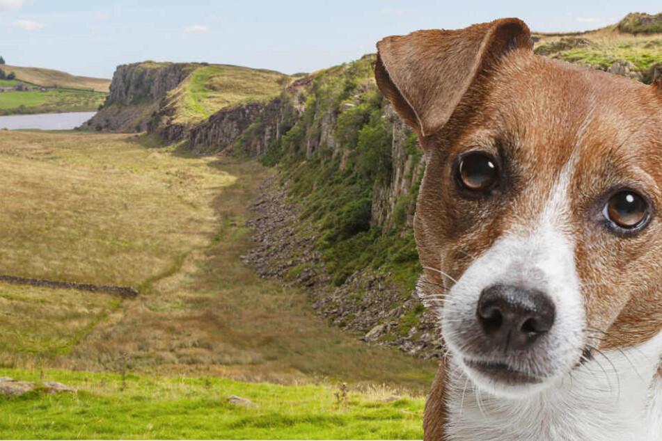 Überlebt ein Hund einen Sturz von 12 Meter Klippe? Dieser hat es versehentlich probiert