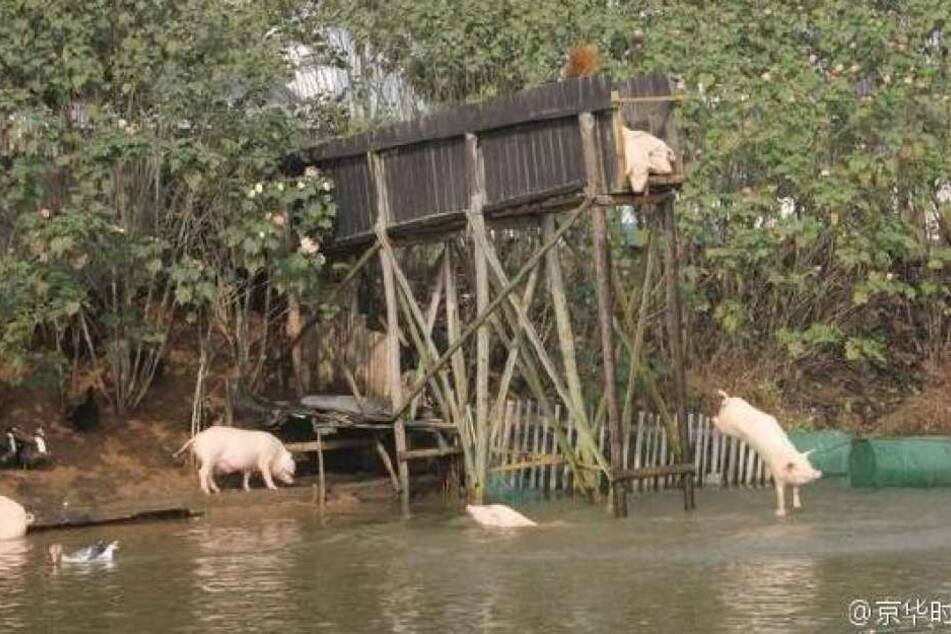 Der Teich, in dem die Schweine fliegen müssen.