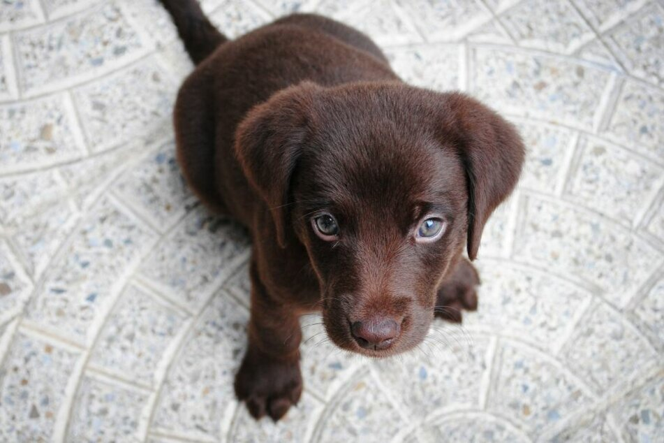 Auch Tierheimhunde können Familien mit Kindern bereichern.