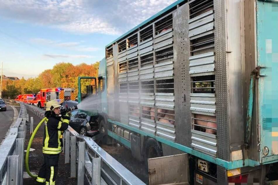 Die Feuerwehr musste den Tiertransport mit den Schweinen abkühlen.